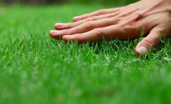 djubrenje trave marciranjem